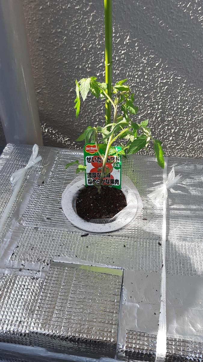 f:id:tomatotopan:20210411205808j:plain