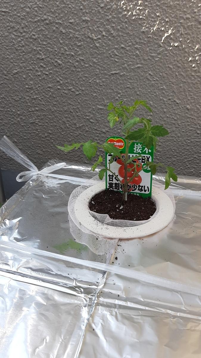 f:id:tomatotopan:20210411205908j:plain