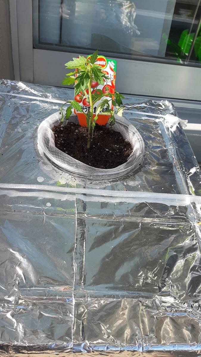 f:id:tomatotopan:20210411210020j:plain