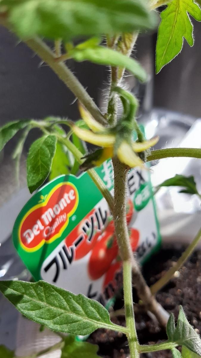 f:id:tomatotopan:20210412091942j:plain