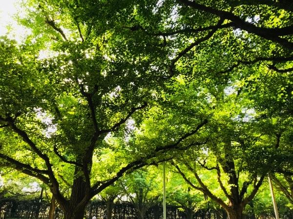 image photo tree