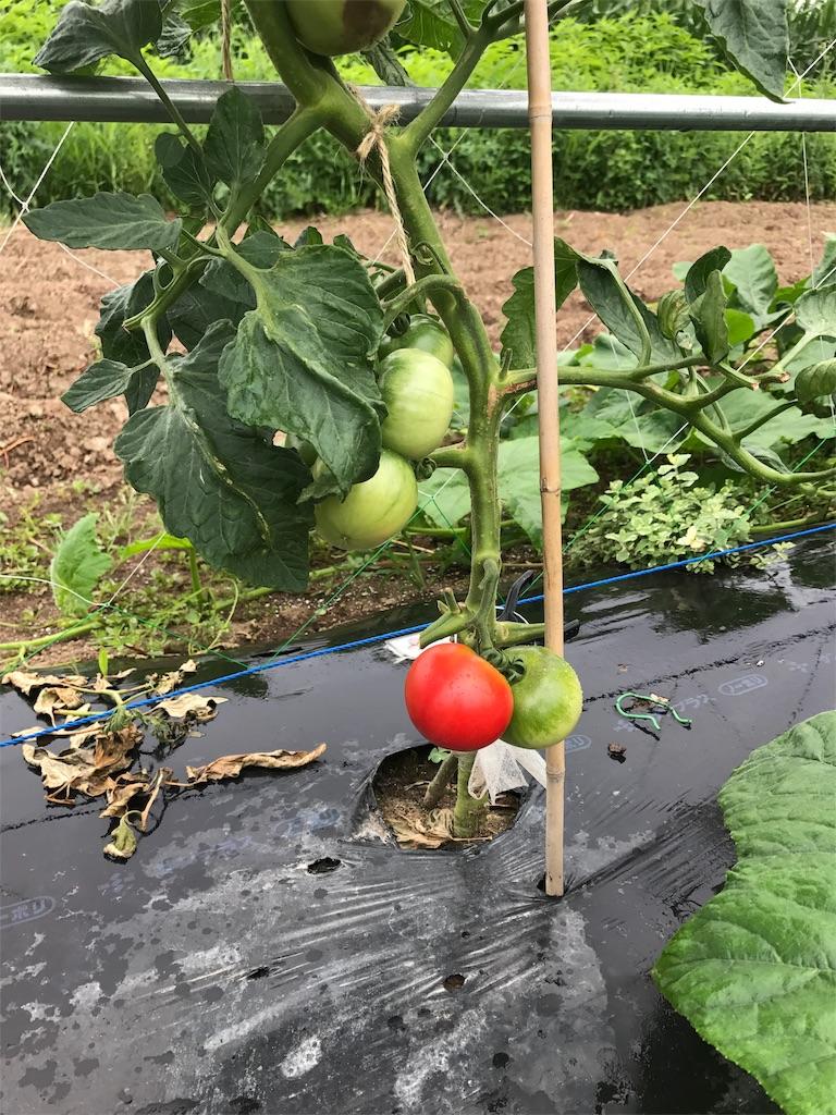 f:id:tomatousagi:20170728132329j:image