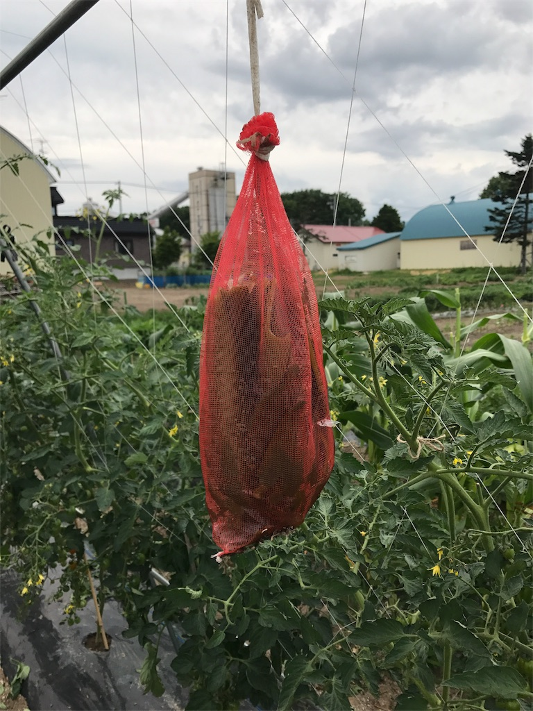 f:id:tomatousagi:20170731004945j:image