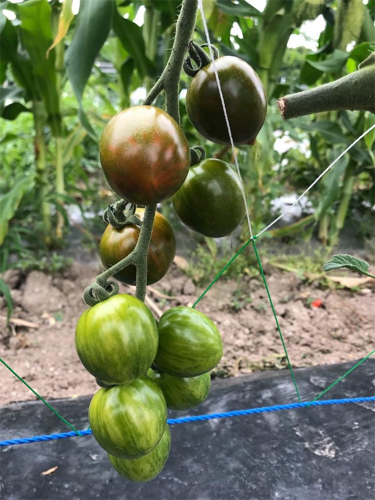f:id:tomatousagi:20170810062829j:image