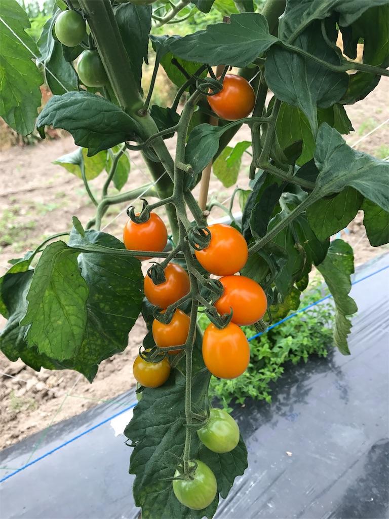 f:id:tomatousagi:20170810062901j:image