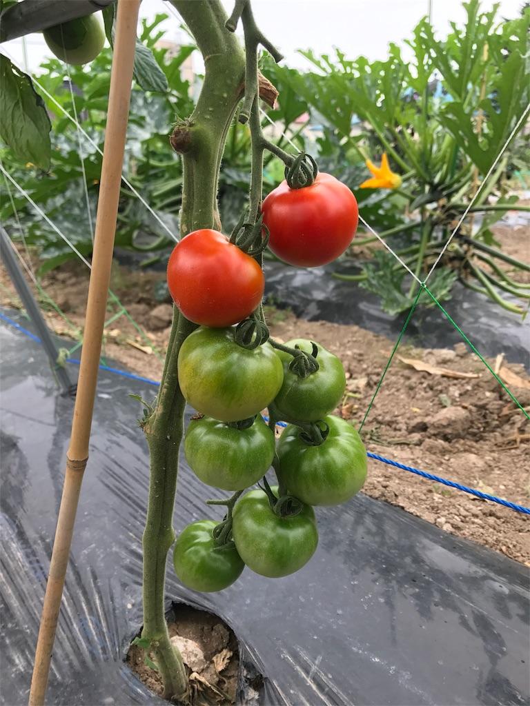 f:id:tomatousagi:20170810062938j:image