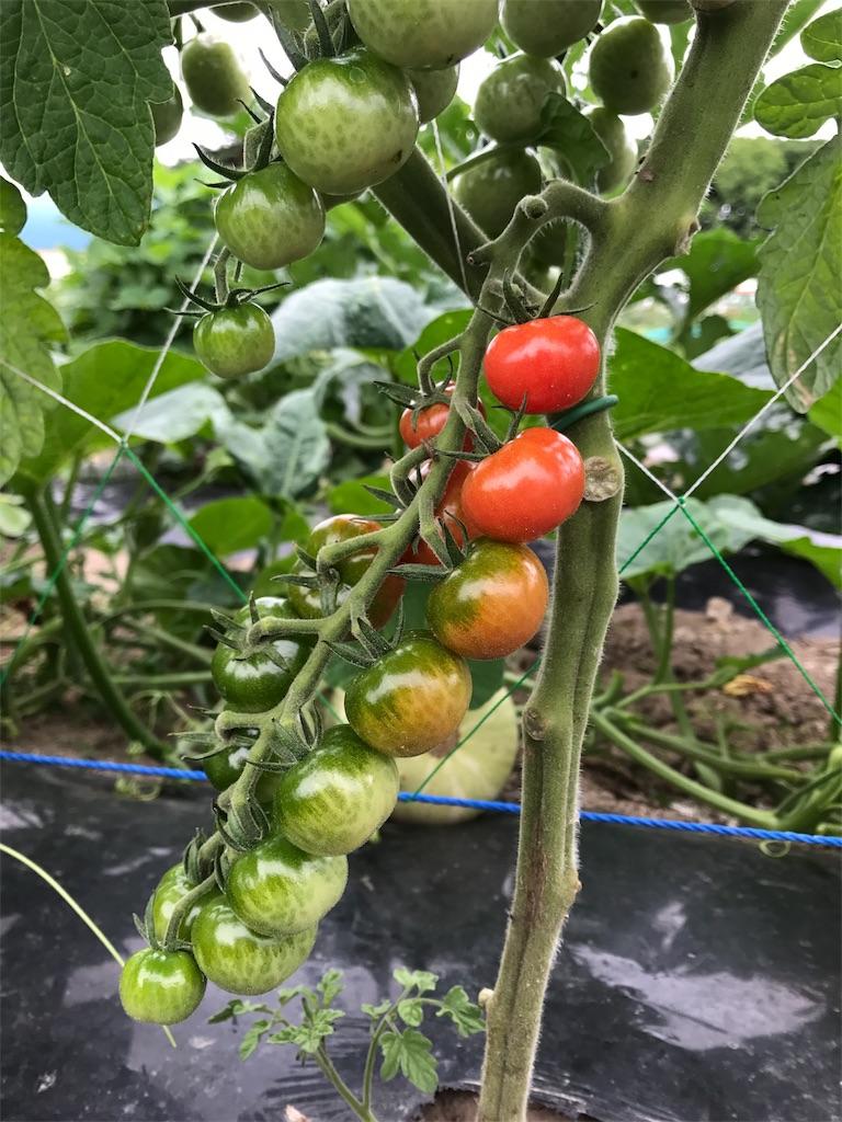 f:id:tomatousagi:20170810063035j:image
