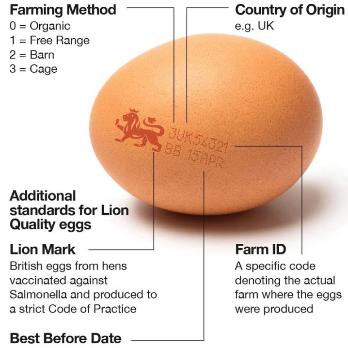 イギリス卵のイメージ