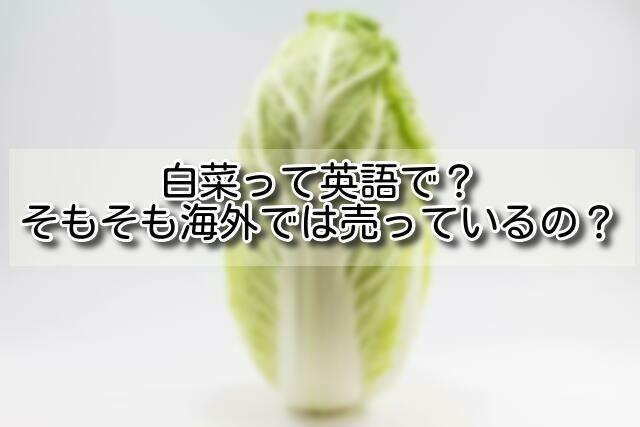イギリス白菜のイメージ