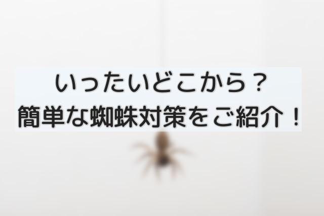 イギリス蜘蛛のイメージ