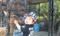 今日は天王寺動物園へ。父は仕事ですが…