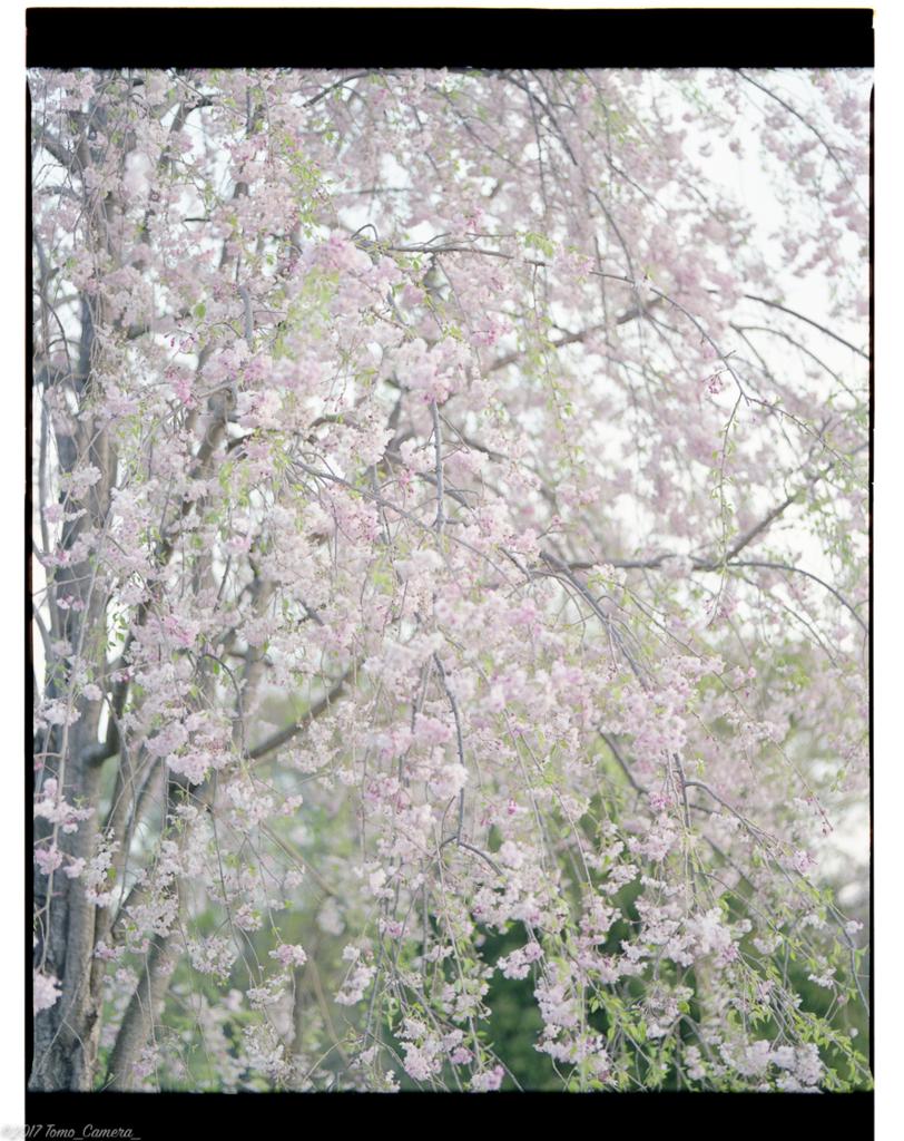 f:id:tomo-camera:20170421220555j:plain