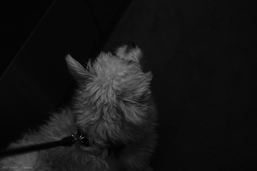 f:id:tomo-camera:20170514114620j:plain