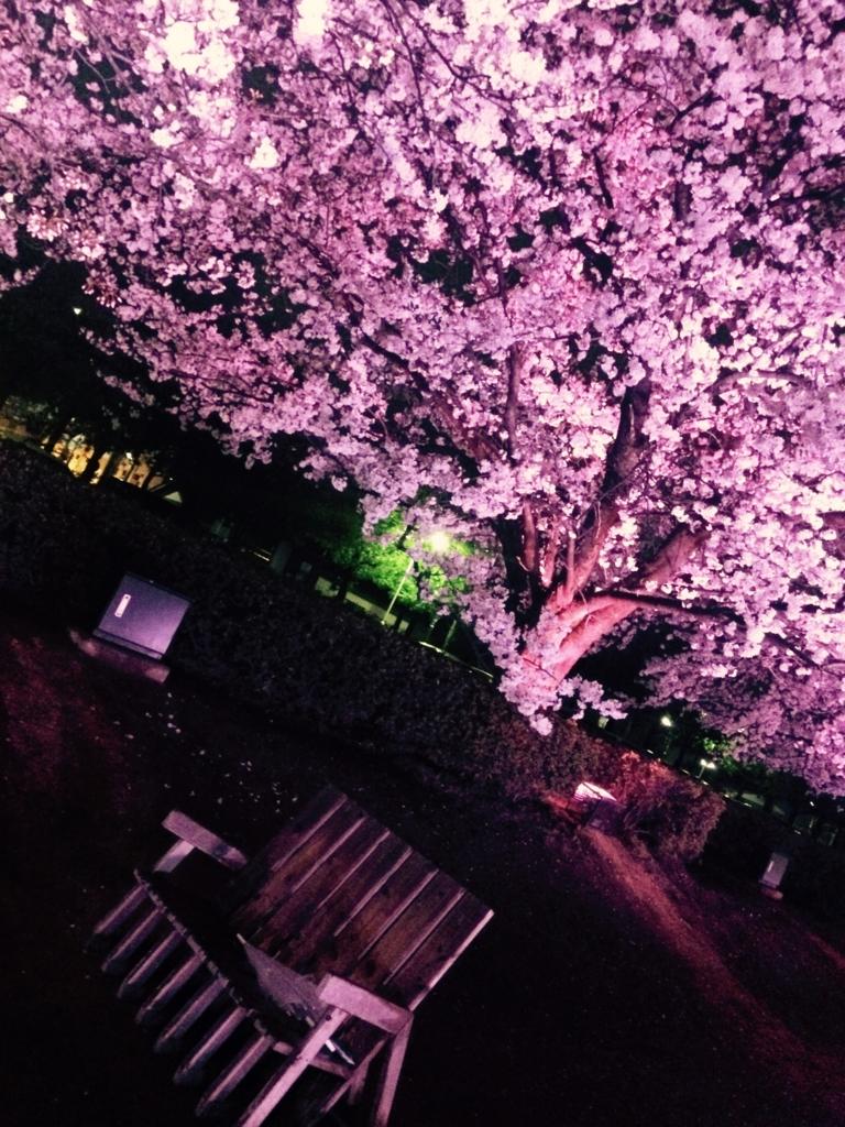 富山 スタバ 環水公園 桜 花見