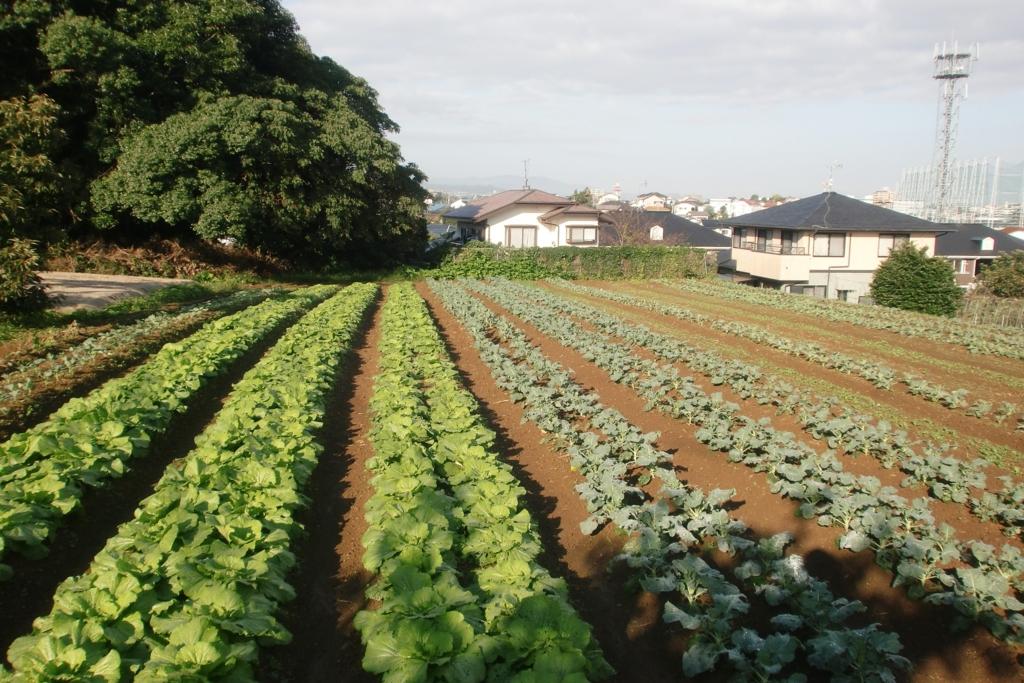 f:id:tomoaki-mikami:20161019212642j:plain