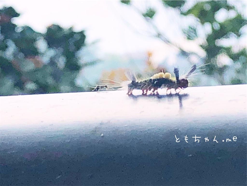 f:id:tomochan-me:20190710165548j:image