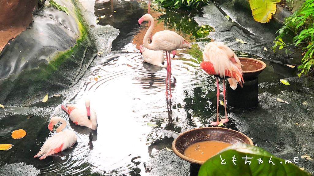 f:id:tomochan-me:20190712020026j:image