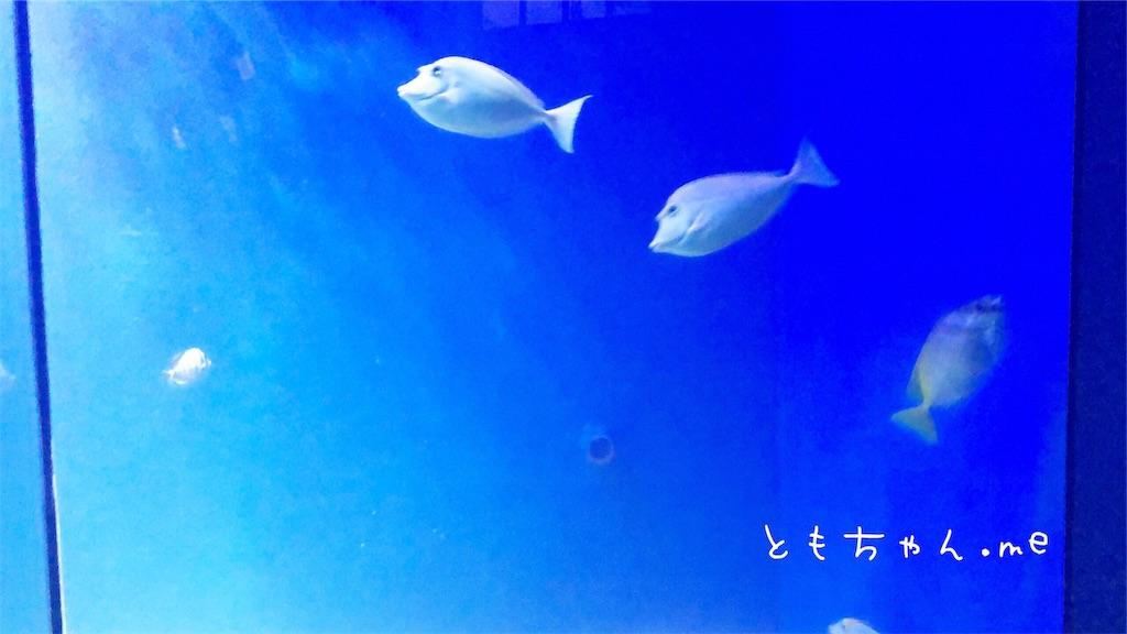 f:id:tomochan-me:20190716133138j:image