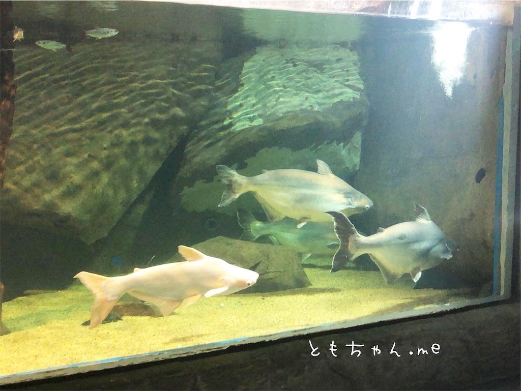 f:id:tomochan-me:20190716133242j:image