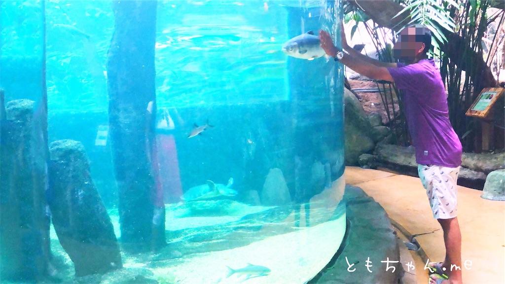 f:id:tomochan-me:20190716133616j:image