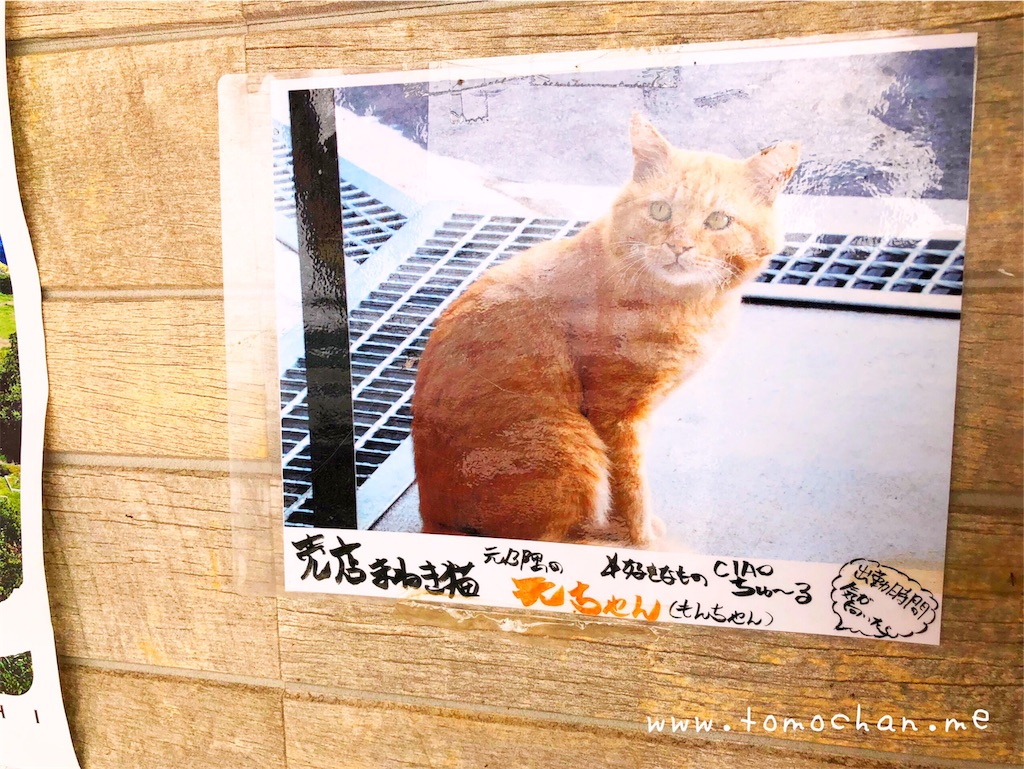 f:id:tomochan-me:20190730162634j:image