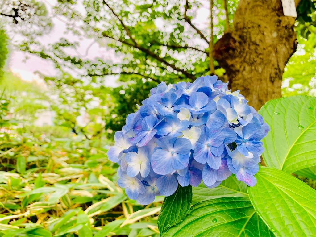 f:id:tomohiko37_i:20190624185846j:image