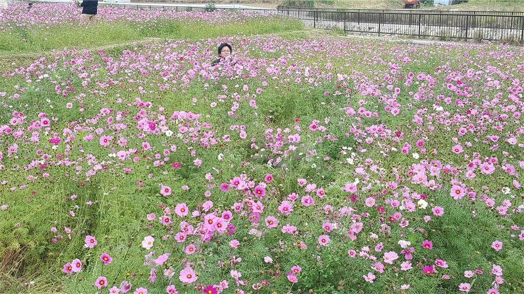 f:id:tomohiro-apr29:20170206182652j:image