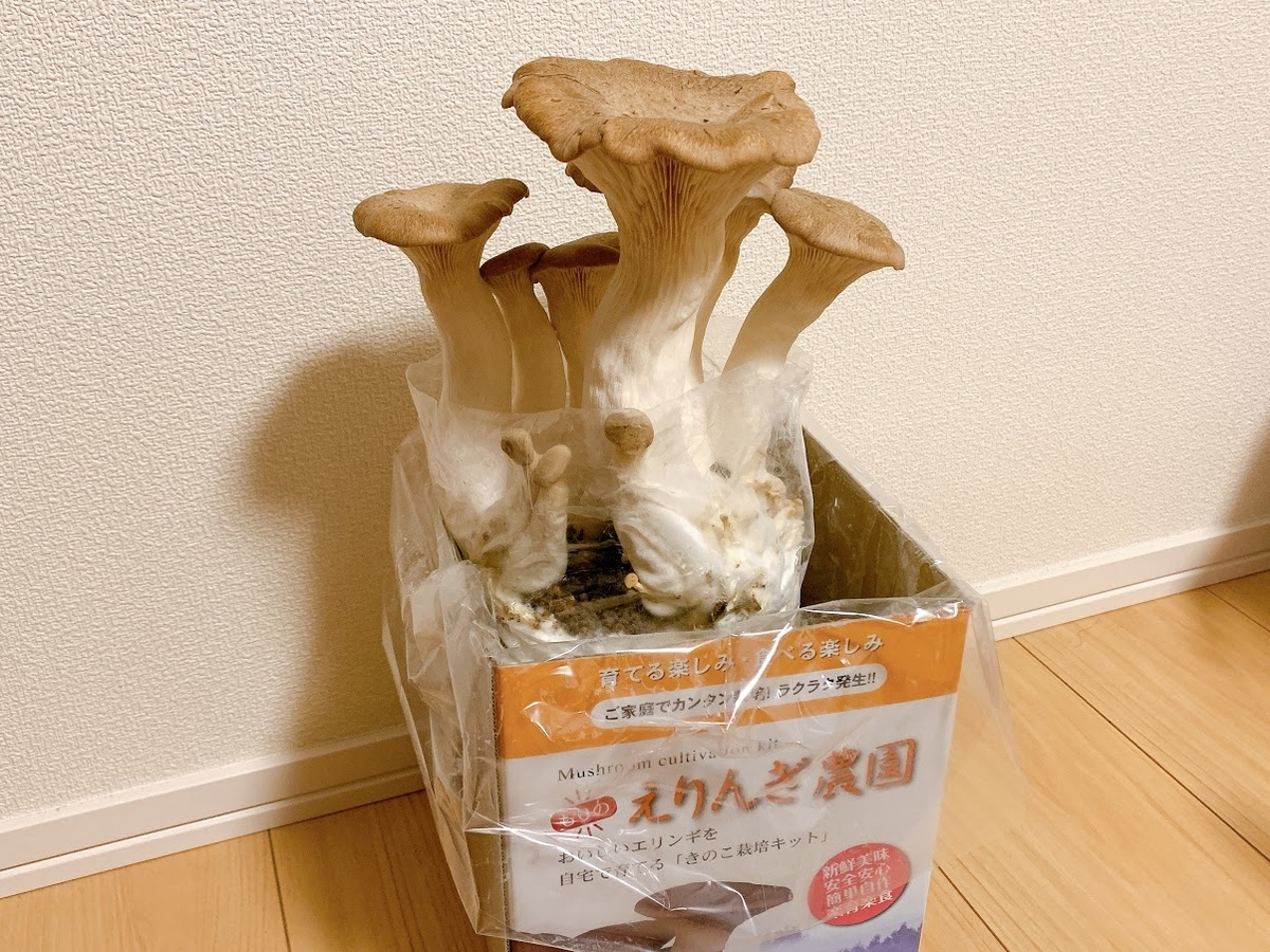 f:id:tomohiro98:20200623150409j:plain