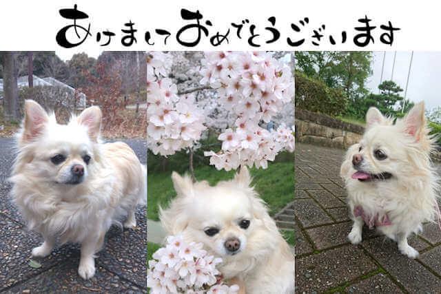 f:id:tomoiku21century:20180103034841j:plain