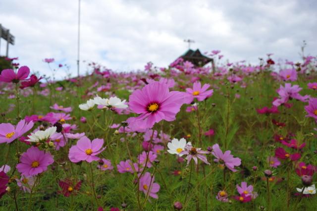 f:id:tomokazu3728:20121029120921j:image