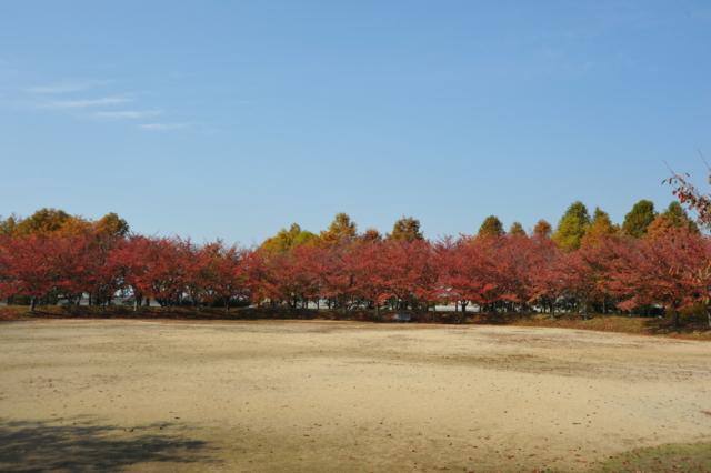 f:id:tomokazu3728:20121108112032j:image