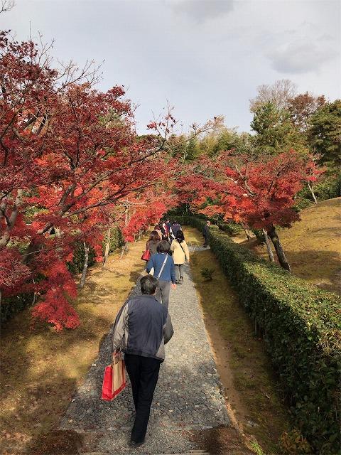 f:id:tomoko-air-tokyo:20190117134054j:plain