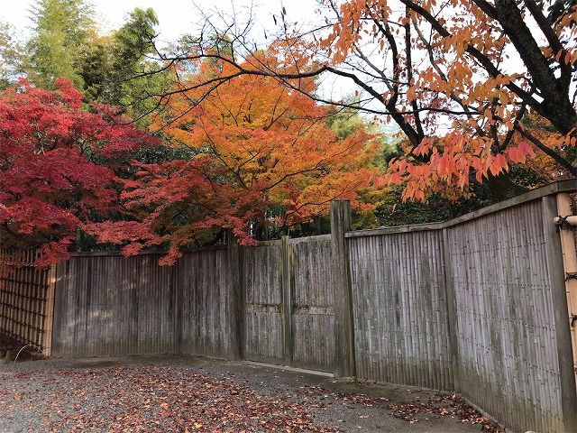 f:id:tomoko-air-tokyo:20190117140655j:plain