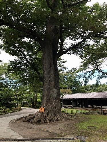 f:id:tomoko-air-tokyo:20190119152729j:plain