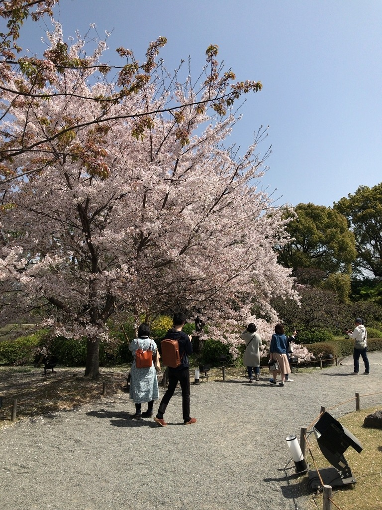 f:id:tomoko-air-tokyo:20190207093622j:plain