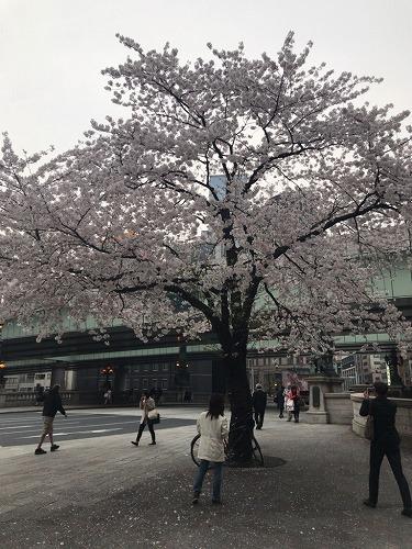 f:id:tomoko-air-tokyo:20190208093059j:plain