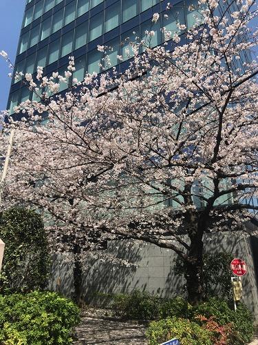f:id:tomoko-air-tokyo:20190208093622j:plain