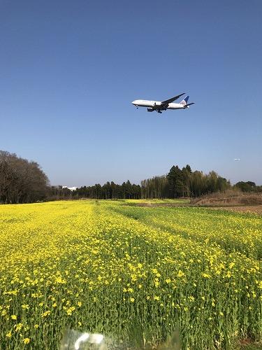 f:id:tomoko-air-tokyo:20190208121535j:plain