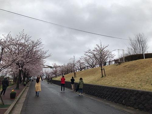 f:id:tomoko-air-tokyo:20190214105246j:plain