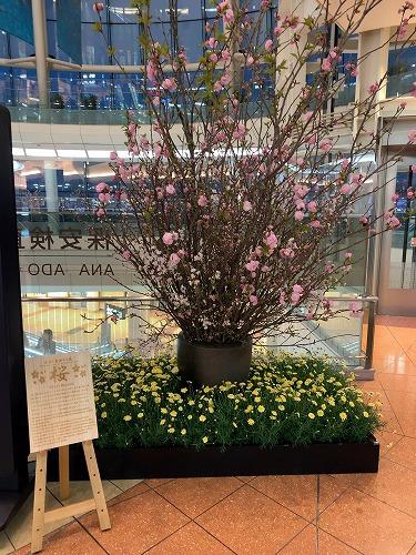 f:id:tomoko-air-tokyo:20190411085139j:plain