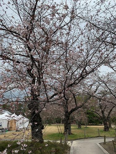 f:id:tomoko-air-tokyo:20190412090345j:plain
