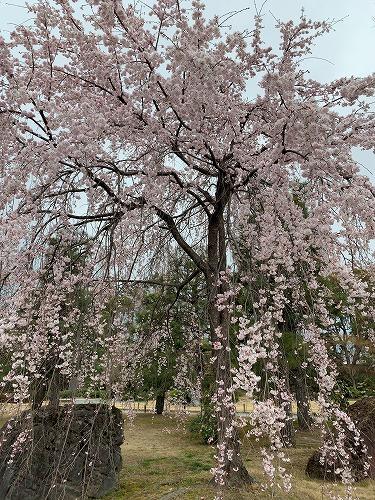 f:id:tomoko-air-tokyo:20190412090359j:plain