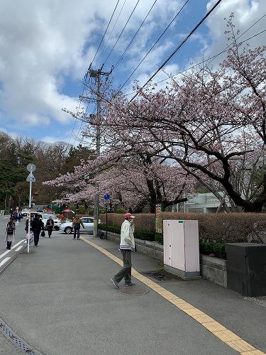 f:id:tomoko-air-tokyo:20190423092211j:plain