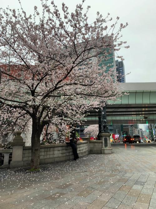 f:id:tomoko-air-tokyo:20200329211518j:plain