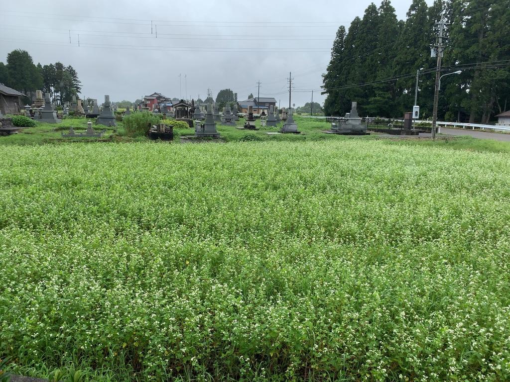 f:id:tomoko-air-tokyo:20201024205431j:plain