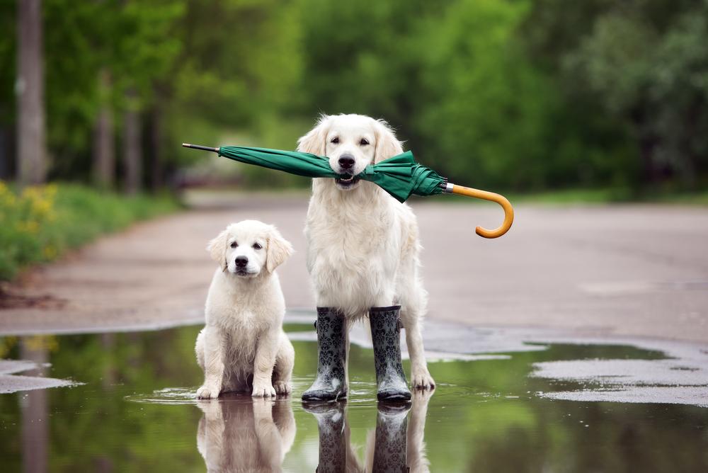 傘をなくす原因って?