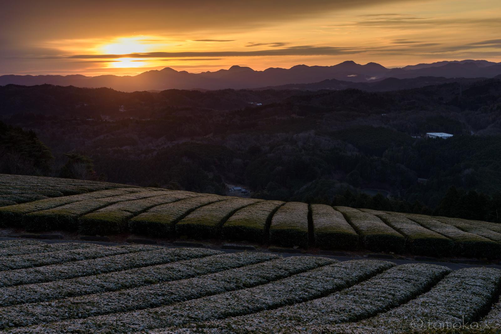 山添村は神野山の霜の降りた茶畑と日の出