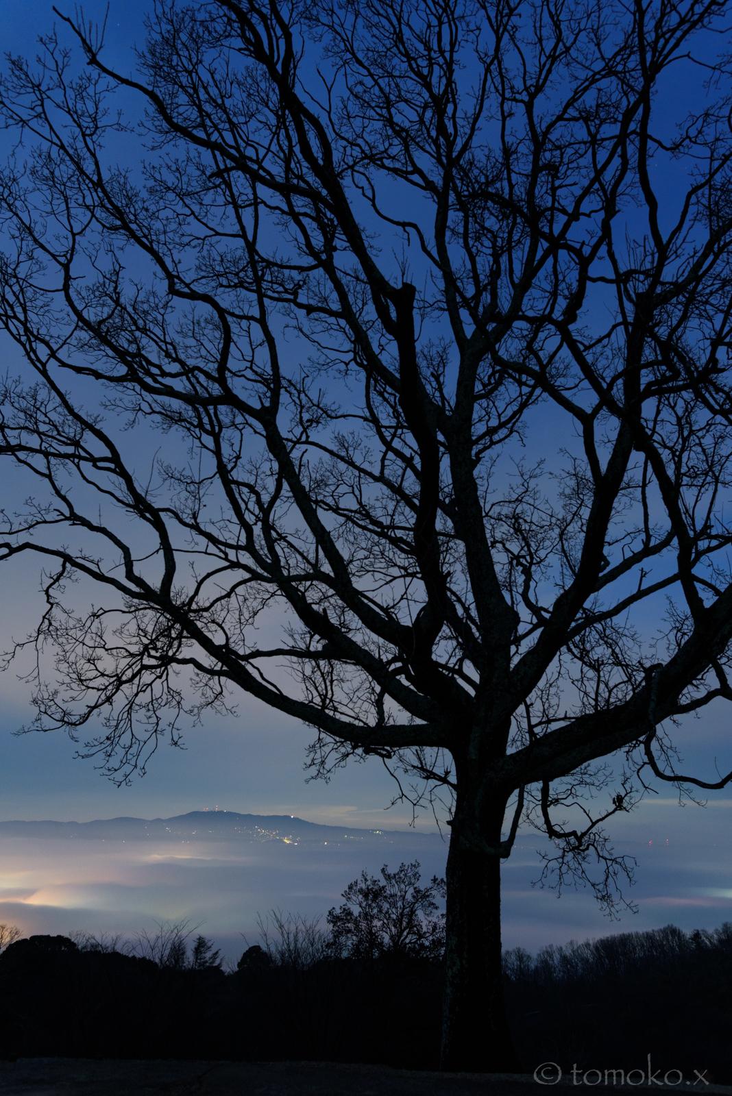 若草山からの夜景雲海と冬枯れの木