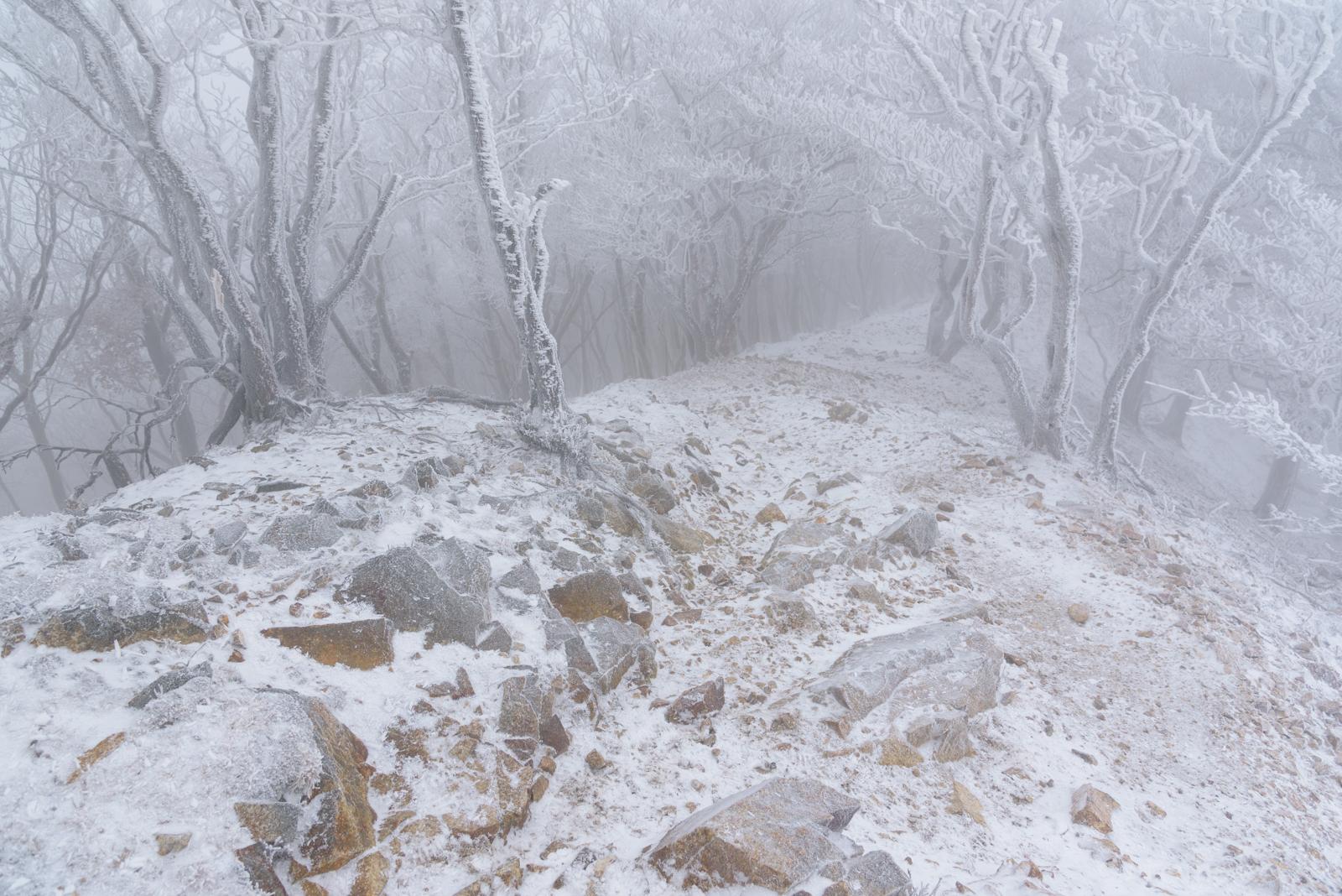 ホワイトアウトの高見山の霧氷