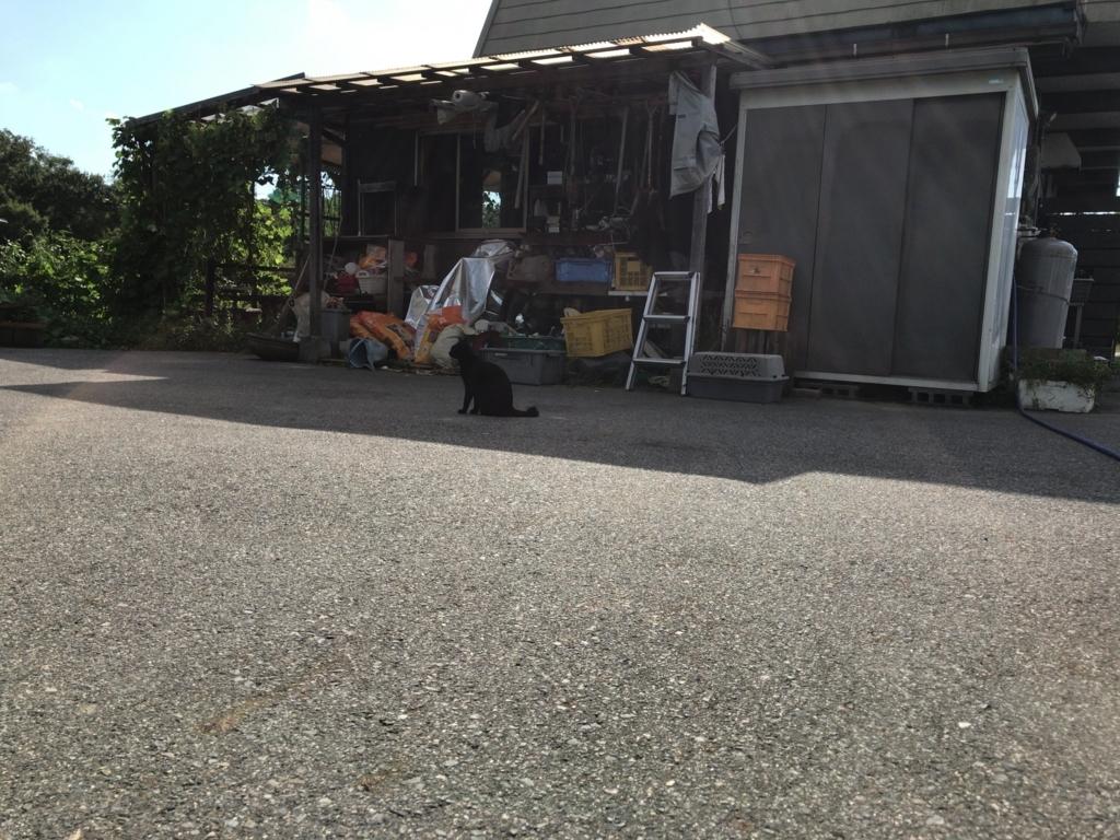 f:id:tomokusa_mei:20170929183122j:plain